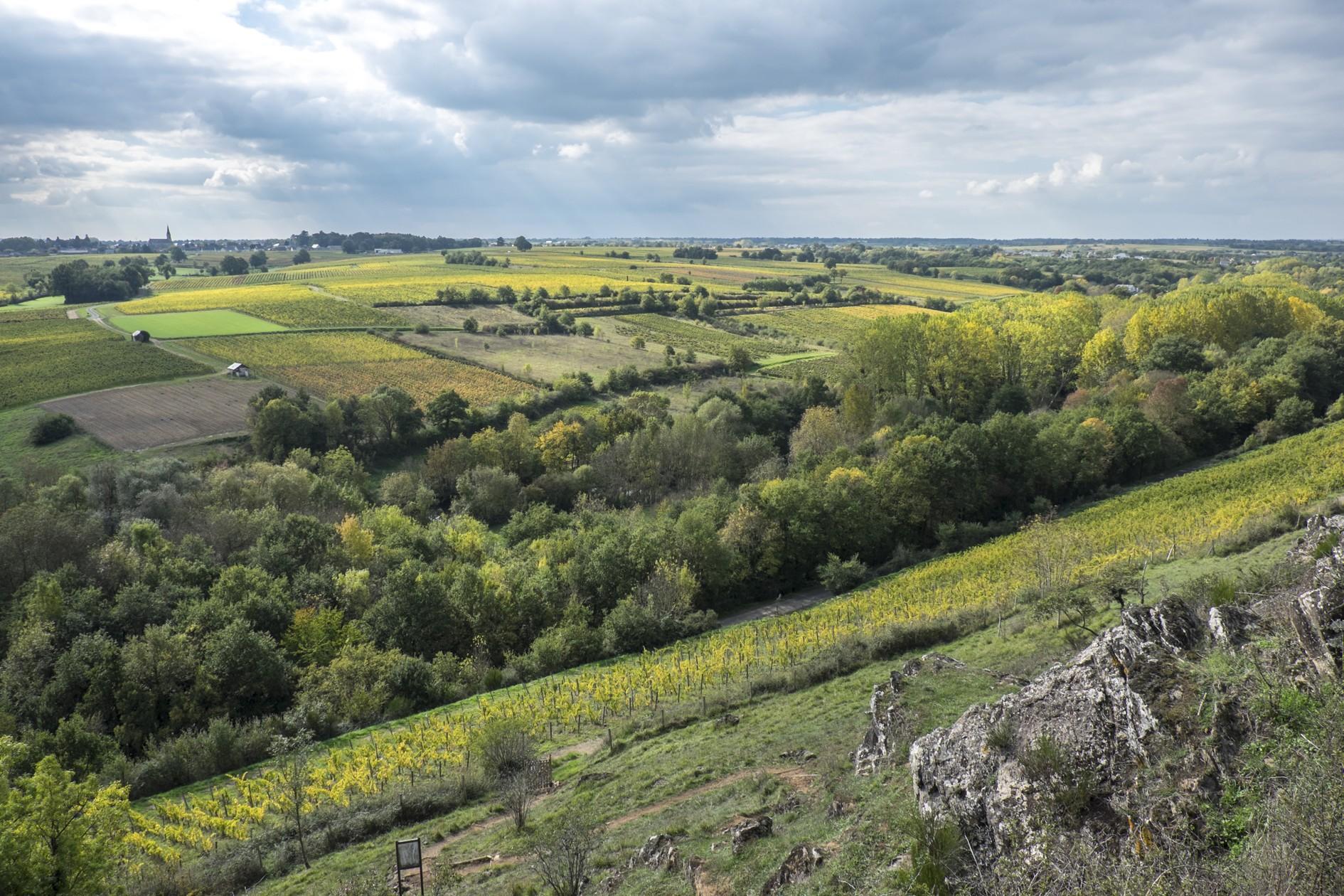 domaine-belargus-a-val-du-layon